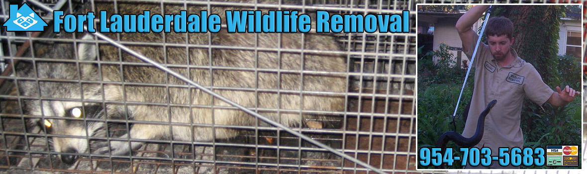 Fort Lauderdale Wildlife and Animal Removal